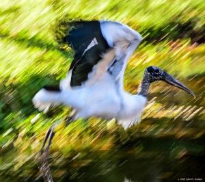 2015.03.16.4698 Wood Stork copy