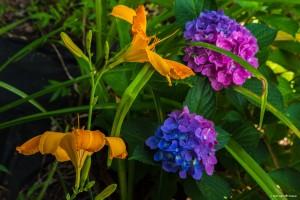 2015.07.17.2736 Summer Blooms