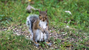 2015.09.04.4143 Squirrel