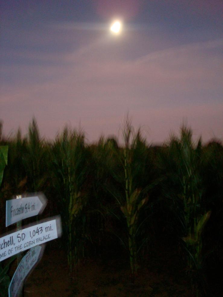 2008.10.11.DSC09681 Corn Maze
