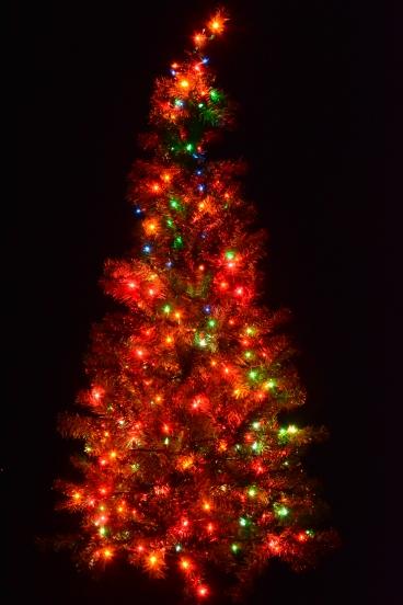 2014.12.23.042 Tree
