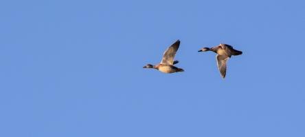 2016.01.14.0010 Geese.jpg