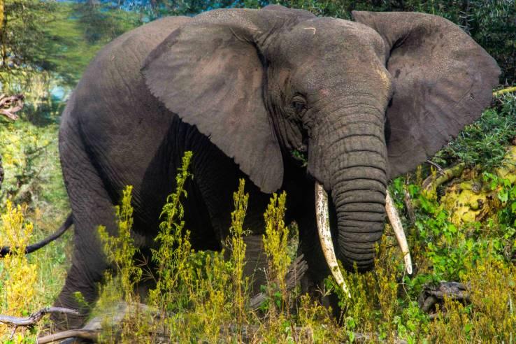 2017.06.20.2577 Elephant (P.O.D.)