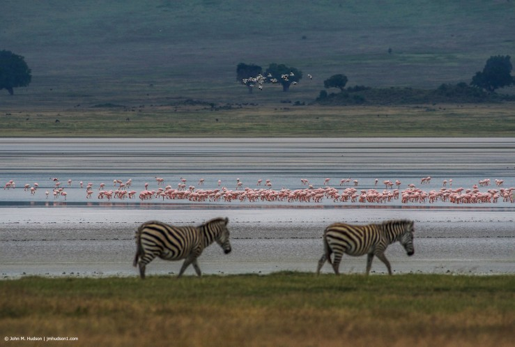 2019.06.09.4120 Blacksmith Lapwings, Flamingoes & Zebras POD