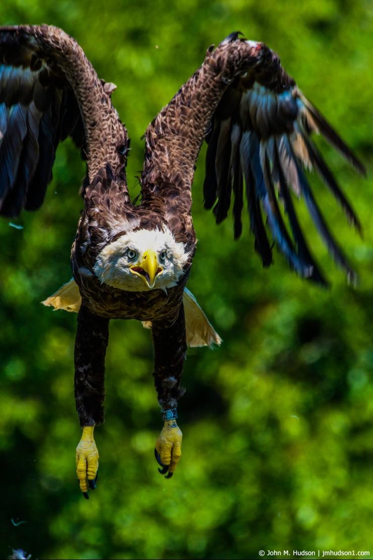 2019.07.30.5492 Eagle II POD